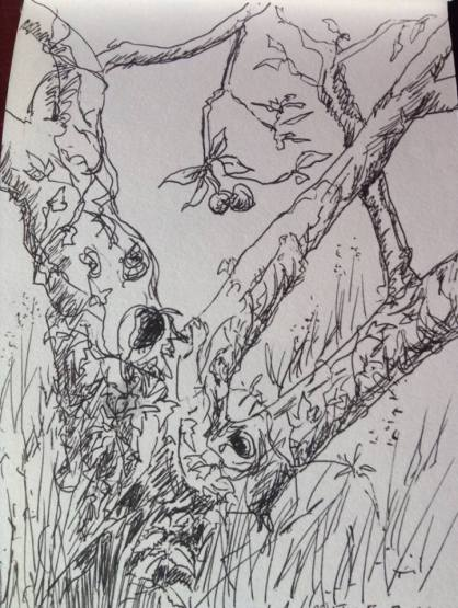 Ink drawing Apple Tree and Ivy