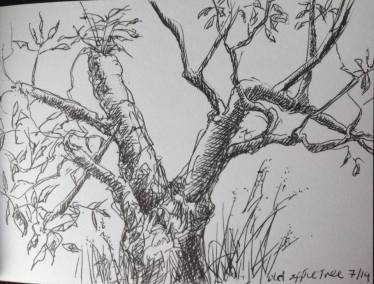 Ink drawing - Old Apple Tree