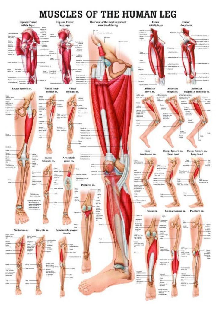 Right Side Leg Pain
