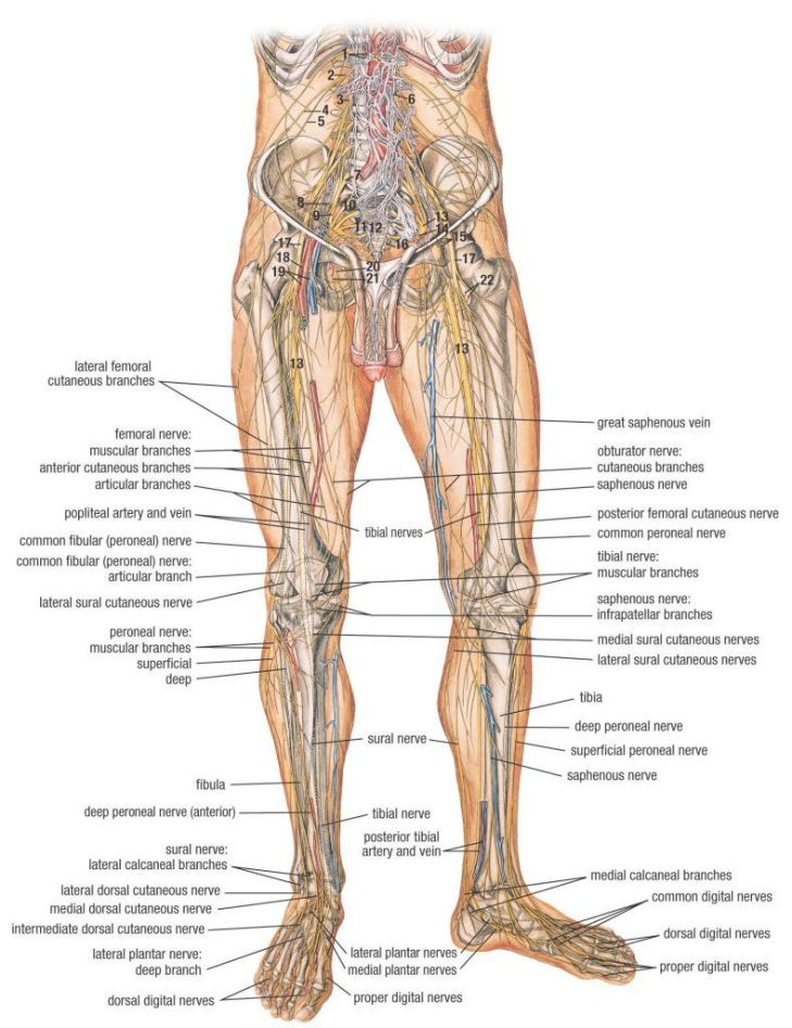 Left Side Leg Pain