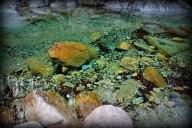 Pale Crystal Waters