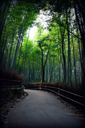 Sagano Bamboo Bend in the Road