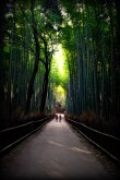 Sagano, Bamboo Forest, Arashiyama, Japan, grass, green, road, kyoto