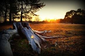 Sunset Stump