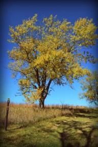 Yellow Tree 2