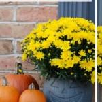 Plastic Pumpkin Bucket Planter Endlessly Inspired