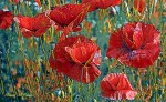 Poppies ...in remembrance