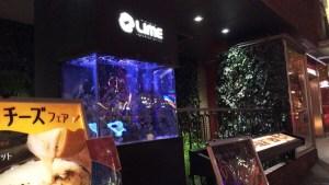 女子会や記念日デートに持ってこいな水槽のある心斎橋のオシャレなお店ご紹介します!