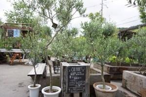 珍しい植物も購入可能!?茨木にある植物園に行ってきました!!