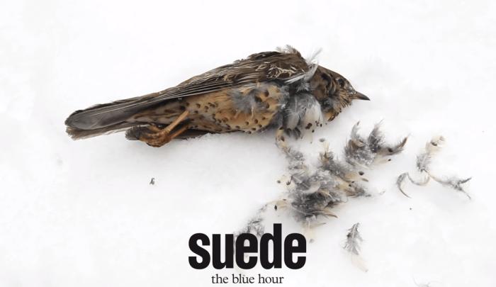 suede-the-blue-hour-copertina-foto.PNG