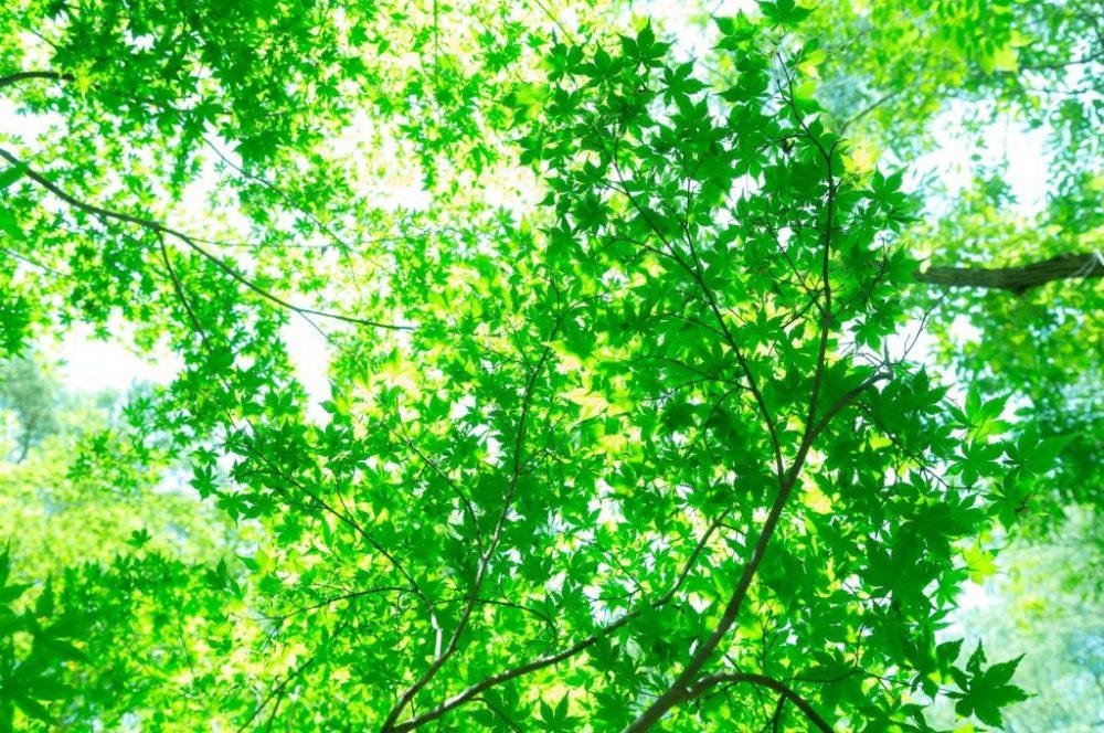 WEB閲覧者に対して間を取るため頭の切り替えをしていただくために森に日差しが差し込む写真画像を掲載
