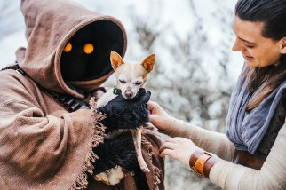 Endor Base at the Placer County Animal Shelter