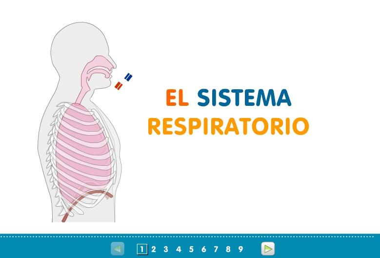 Unidad didáctica del Aparato Respiratorio