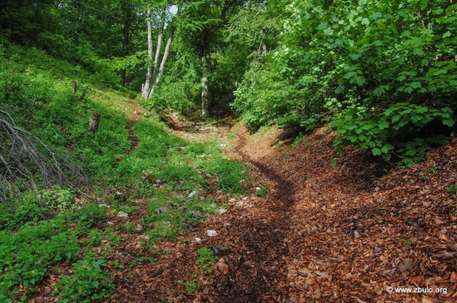 The trail to Korita leads partly through dense forests that can provide shade in summer.