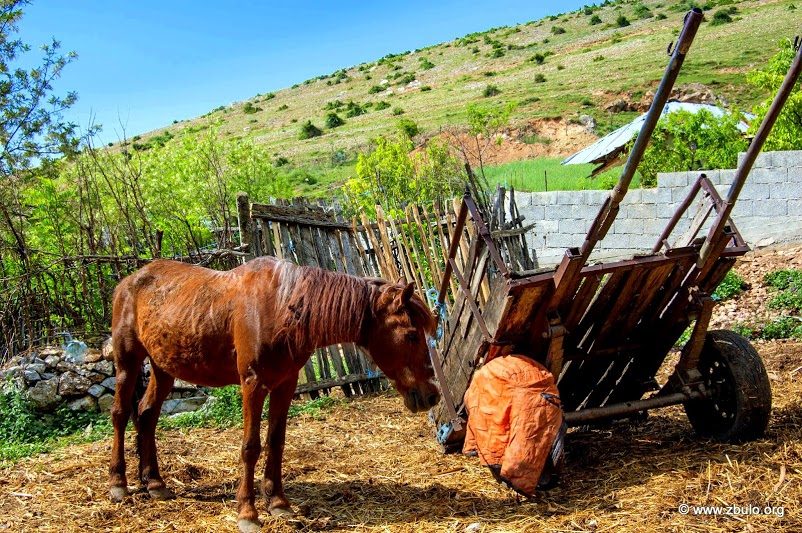 It is possible to rent horses for the luggage transfer to the ridge where can also camp.
