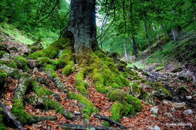 Scrubs dominate the banks and lower areas but old grown forest can still be found on the slopes of Galicica.