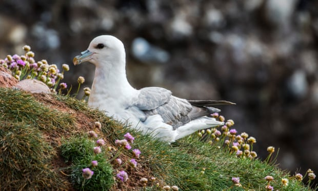 Plastics reach remote pristine environments, impacting birds' eggs of Arctic birds