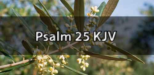 Psalm 25 KJV