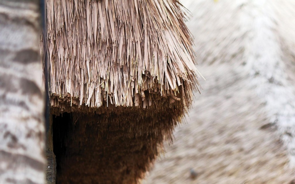 mice and other thatch pests