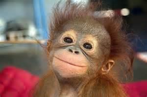 easy cute monkey