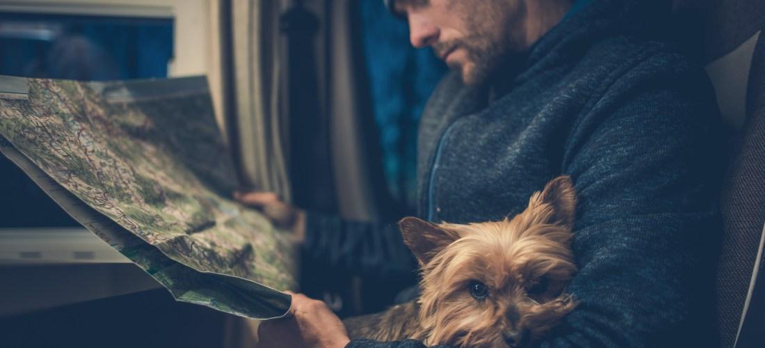 Requisitos mínimos para viajar con mascotas