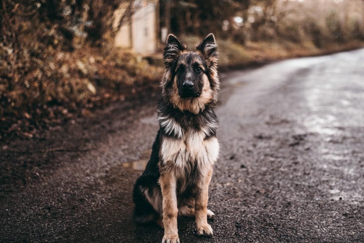 Qué hacer cuando te encuentras con un perro abandonado (o perdido)