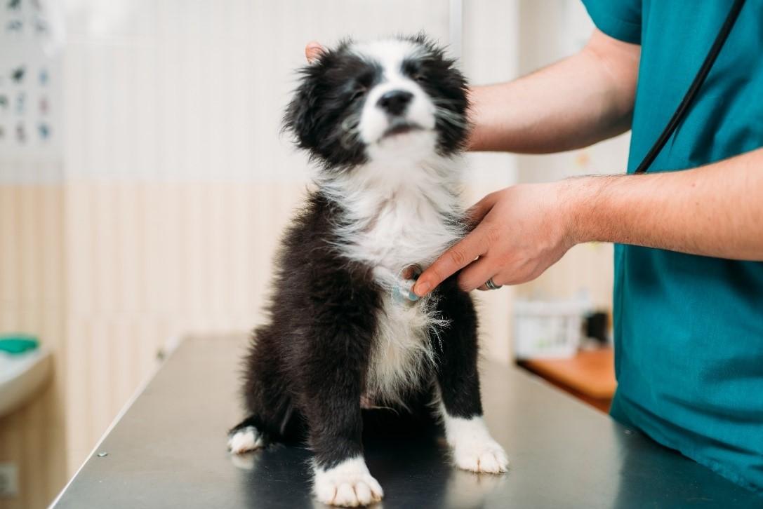 El futuro de la profesión veterinaria