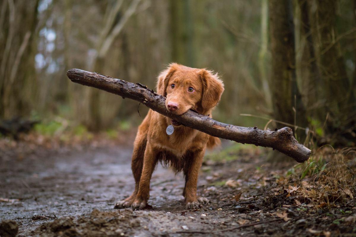 Consejos de los veterinarios para cuidar a tu perro en otoño