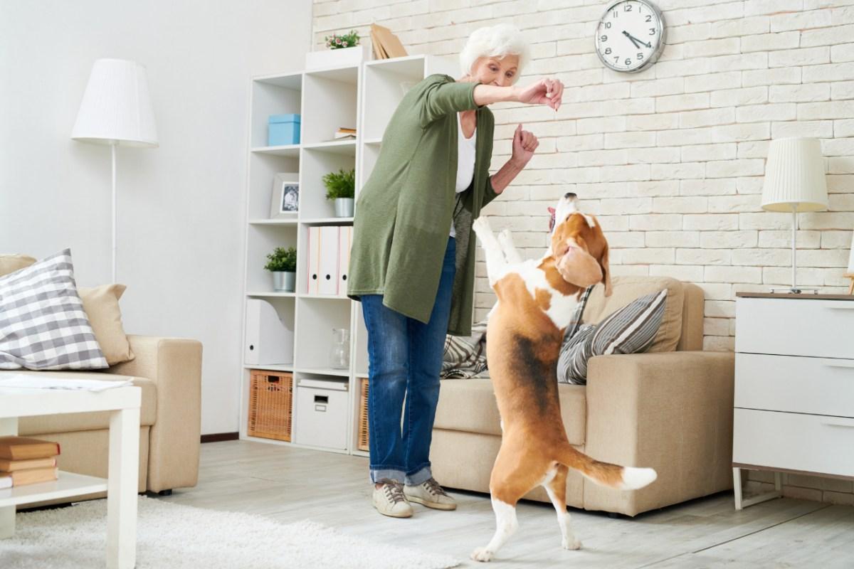 ¿Qué es la etología veterinaria?