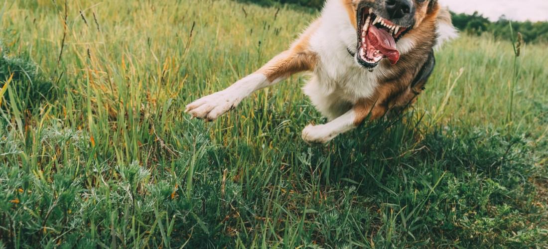 La rabia, síntomas frecuentes y cómo tratarla