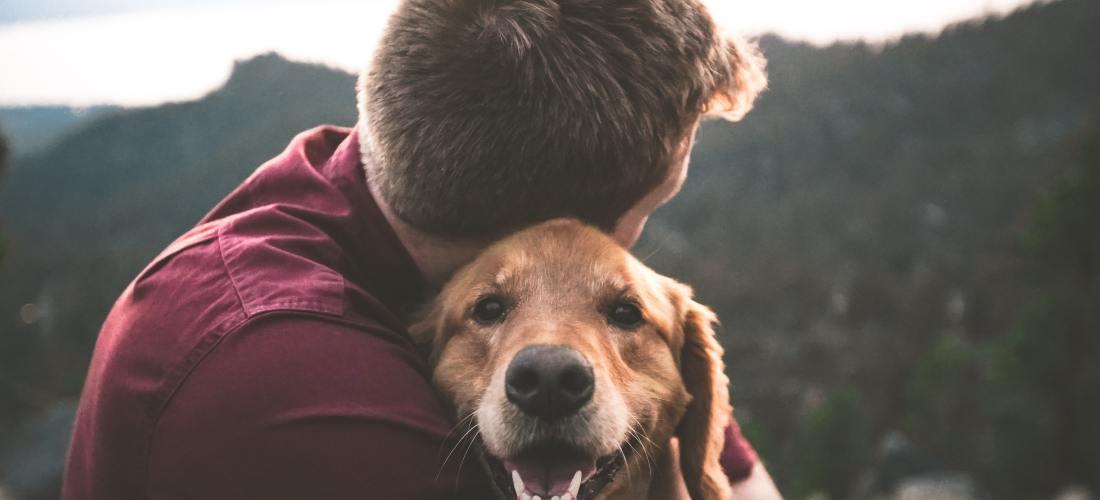 Cómo afrontar la muerte de tu mascota