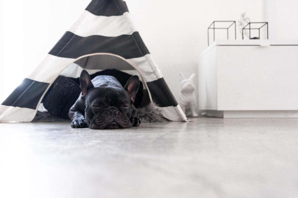 Todo lo que debes saber sobre los resfriados en mascotas