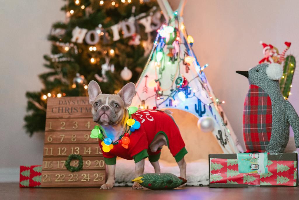 navidad perro