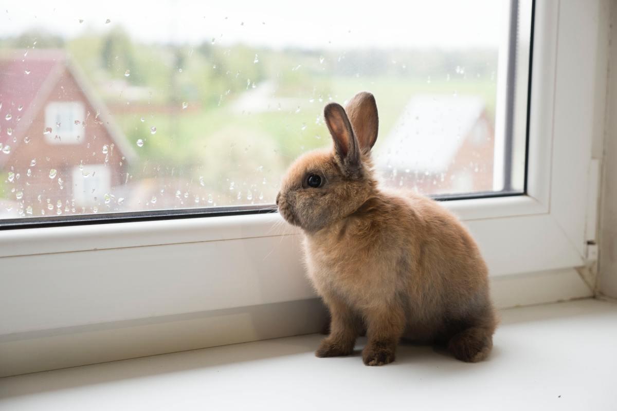 5 curiosidades que (quizá) no sabías sobre los conejos