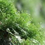grön buske