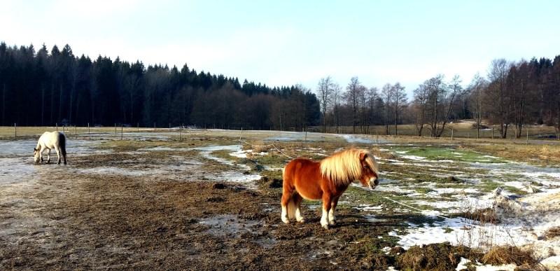 frilansliv ute i naturen tyresta