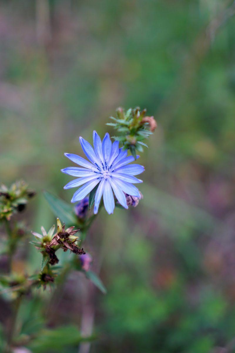 blomma blå, köpstopp inspiration
