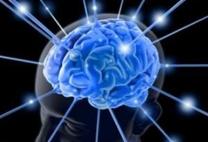 brain-300x206