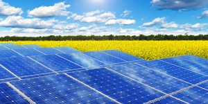 Solar panels in rape field