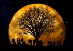 tree-66465