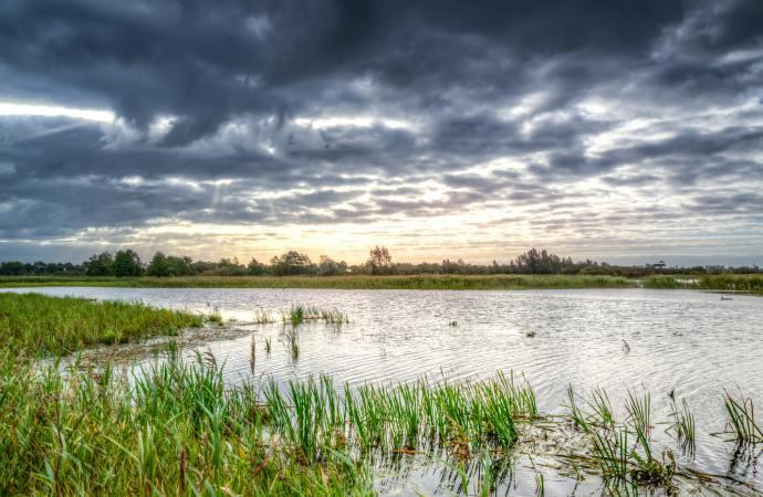 Vlažna staništa su prirodno rješenje problema klimatskih promjena