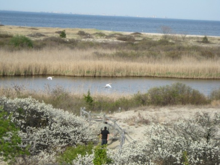 Sandy Hook Bay, photo credit: American Littoral Society