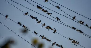 200 новых птицезащитных устройств установили специалисты «Россети Юг» на ЛЭП