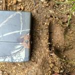 Qigong Reatreat 2014 - Wildschwein Jagd-Begleitung