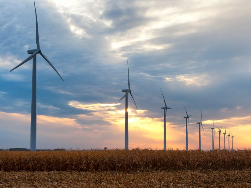 A row of wind turbines tower over a cornfield in central Iowa