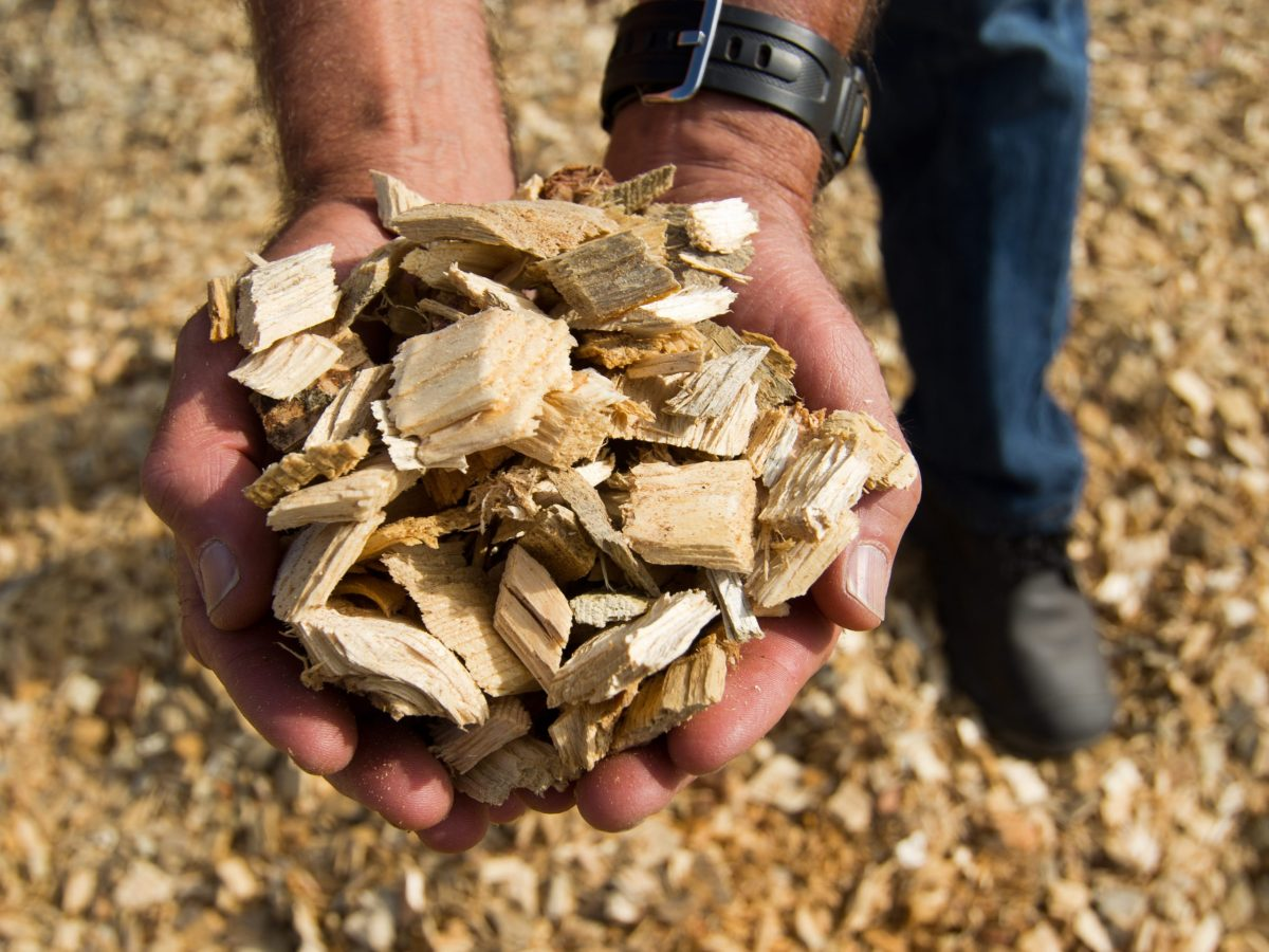 A person holds a handful of chopped wood for biomass.