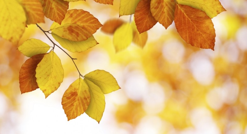 Fall and Winter Energy-Saving Tips