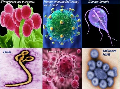 bioterrorism-pics-of-deadly-organisms