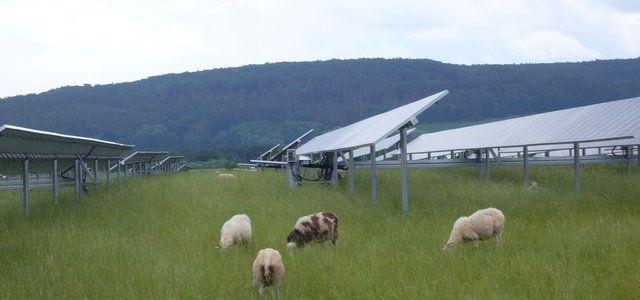 Sheep grazing below a ground-mounted solar array in Bavaria: people who say solar arrays and wind farms take up space should remember dual usage. (Photo by Craig Morris)