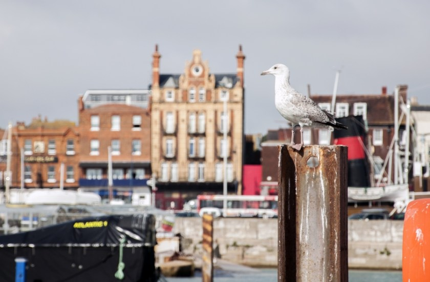 A seagull sits in front of the harbor